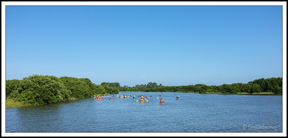 Cedar Key Kayakers-3