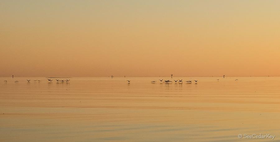 Cedar Key Kayak paddle 021813-5
