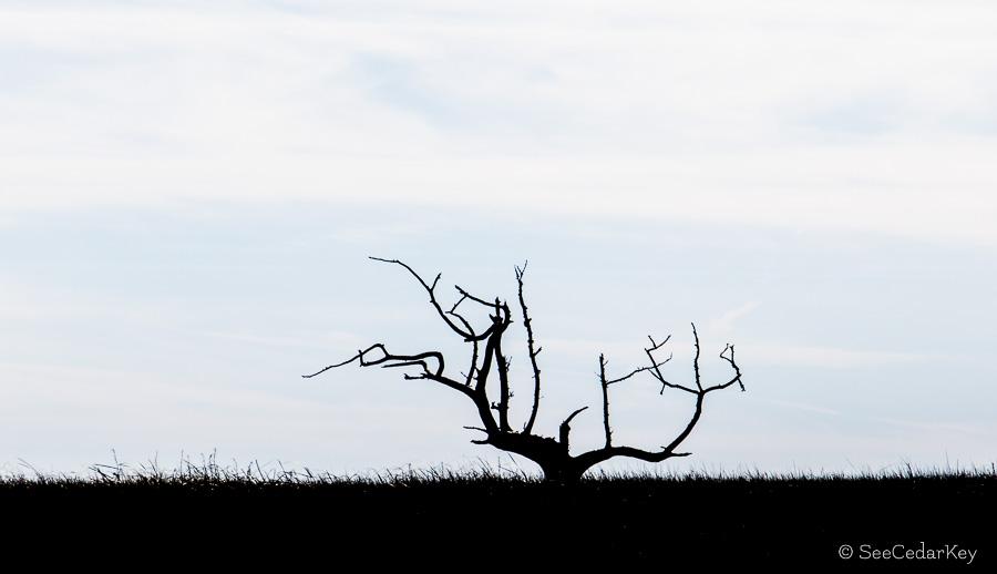A lone dead tree on the Suwannee River