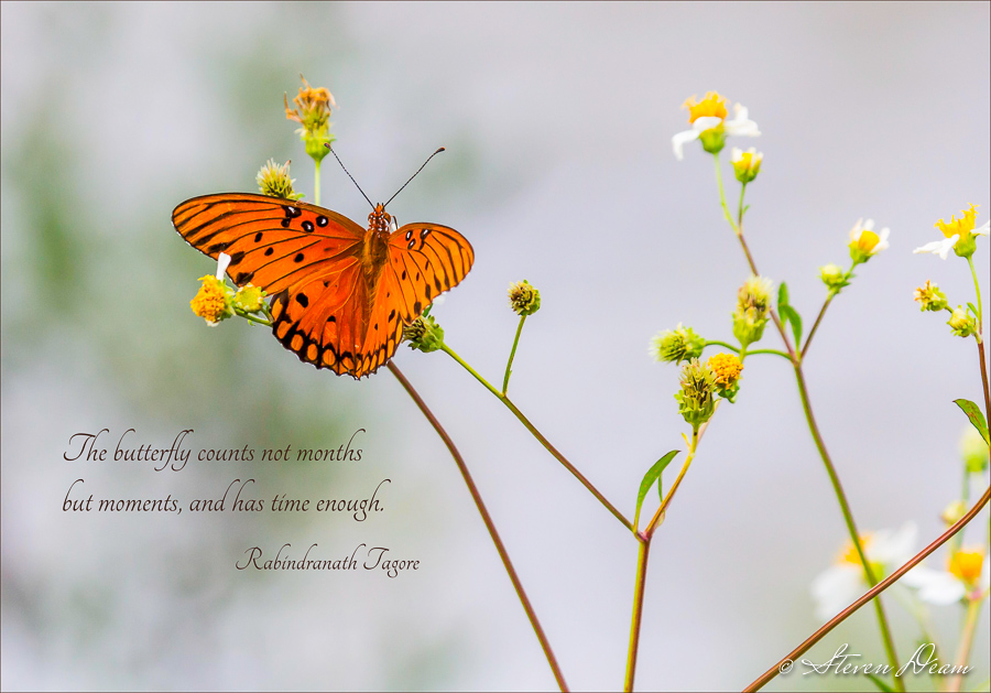 A Cedar Key Florida Butterfly Quote
