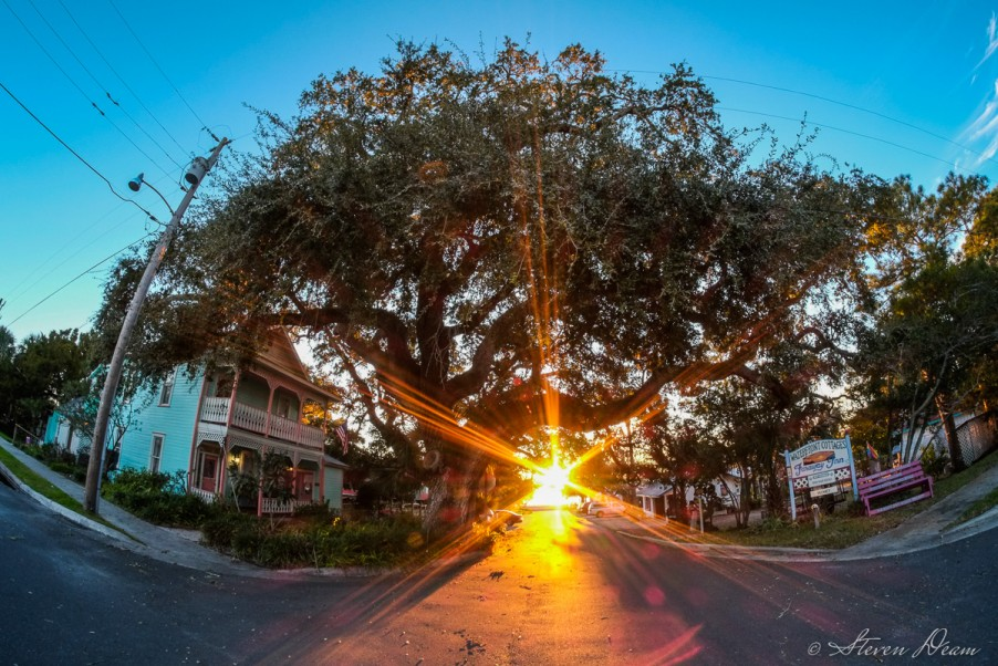 Sunset through a live oak tree