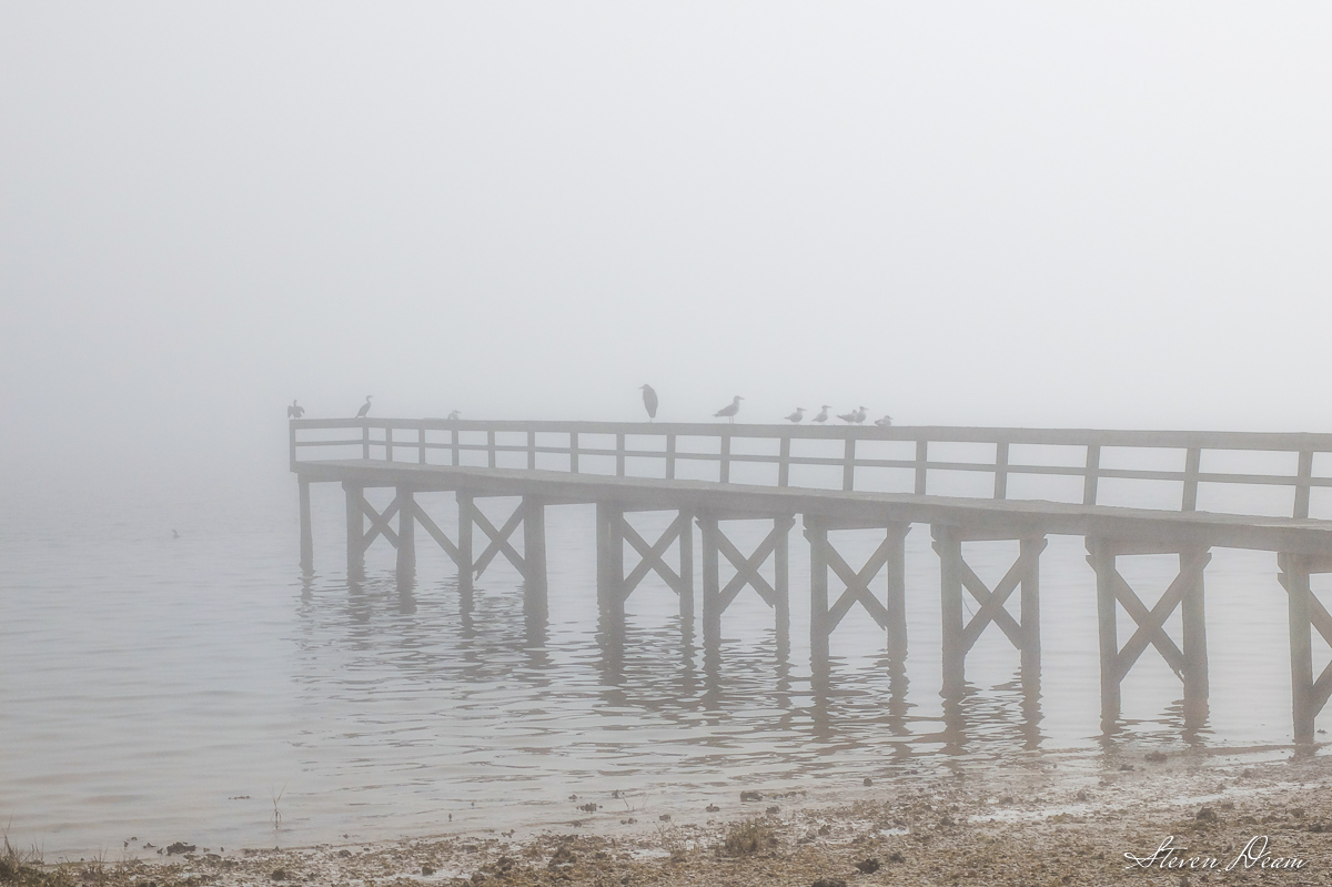 Foggy morning in Cedar Key