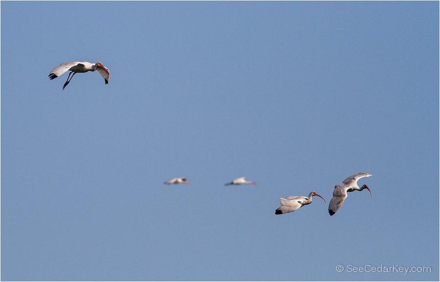 birds-in-flight-10