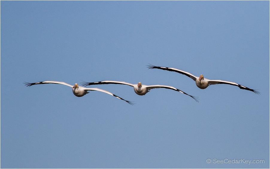 birds-in-flight-2