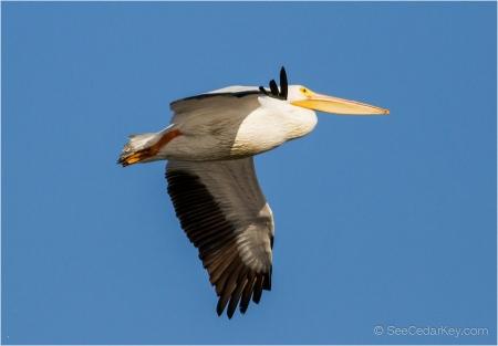 birds-in-flight-3