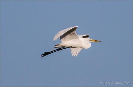 birds-in-flight-4