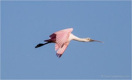 birds-in-flight-5
