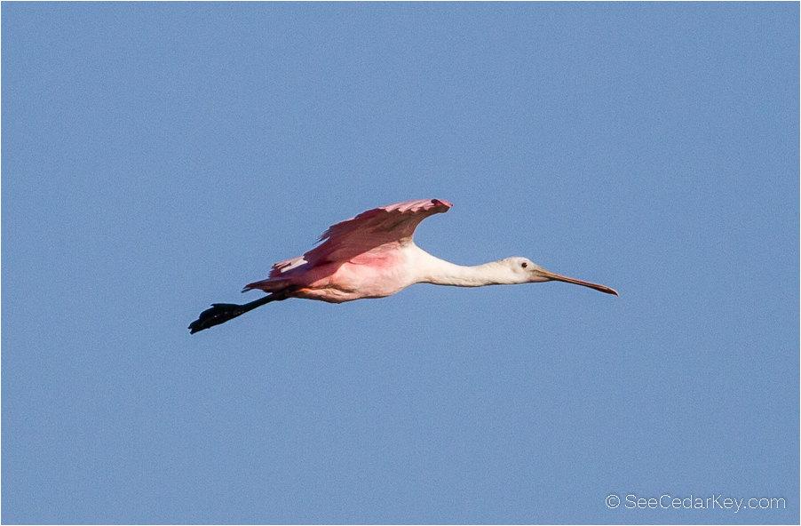 birds-in-flight-6