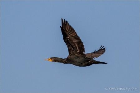 birds-in-flight-7