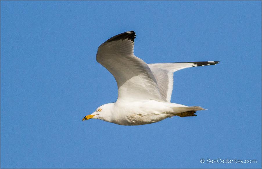 birds-in-flight-8