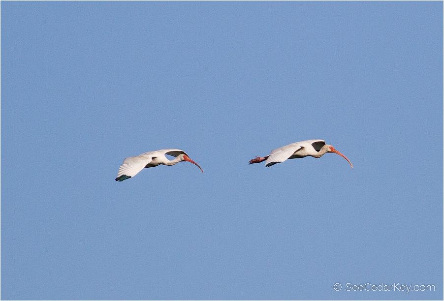 birds-in-flight-9