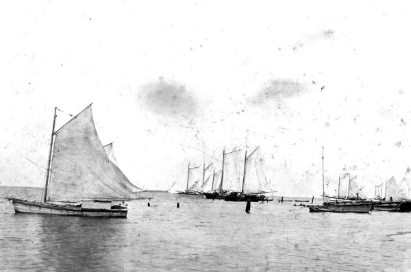Historical images of cedar key see cedar key for Cedar key fishing
