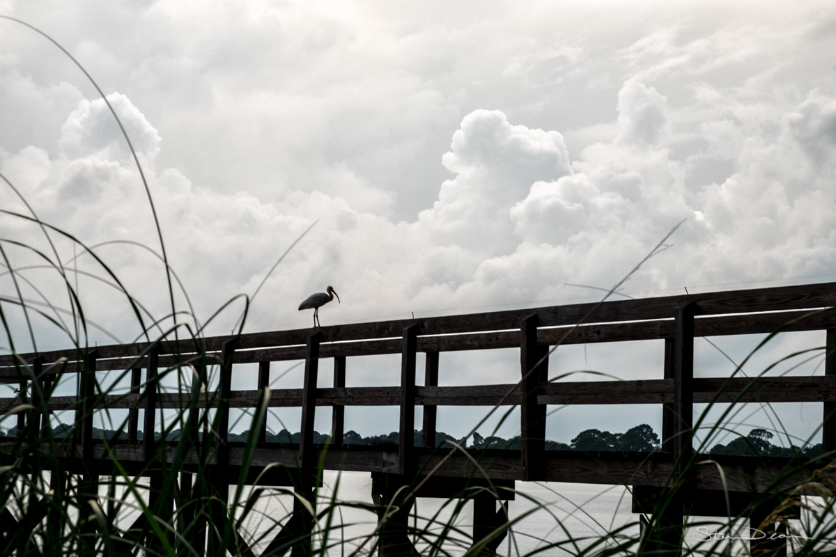 An Ibis and a storm