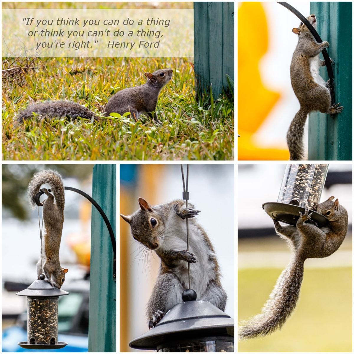 squirrel-w_quote