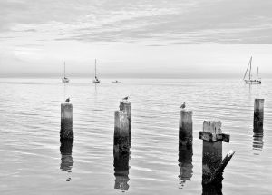 Cedar Key in Black White-4.jpg