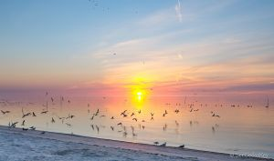 Cedar Key Sunrise 020313-3.jpg