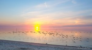 Cedar Key Sunrise 020313-4.jpg