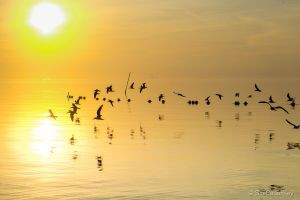 Cedar Key Sunrise 020313-6.jpg